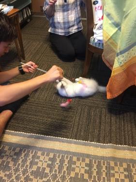 幸運を運ぶバーマン子猫 – オーディンちゃん –