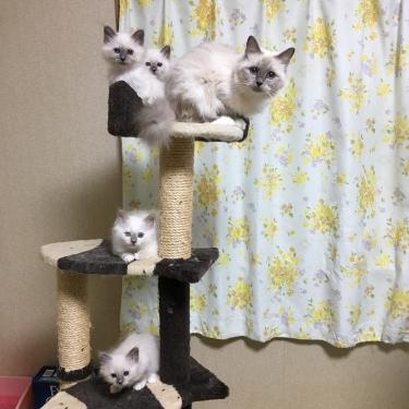 子猫の実 豊作 (=^ェ^=) おさかな キャット タワー