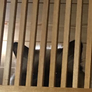 幸運を運ぶ猫バーマン − 進行状況 監視中 −