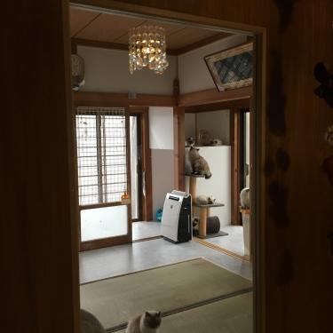 猫部屋ー全景ー