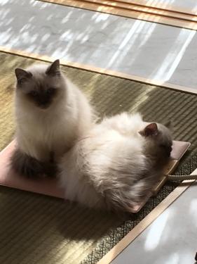 猫部屋 − 午後のシェスタ ー