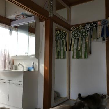 猫部屋 – 洗面台 & ミラードア –