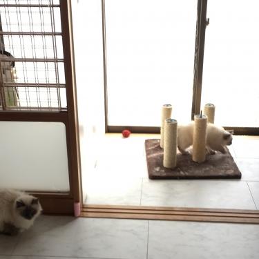 猫部屋 – 障子の鍵 代用品 −