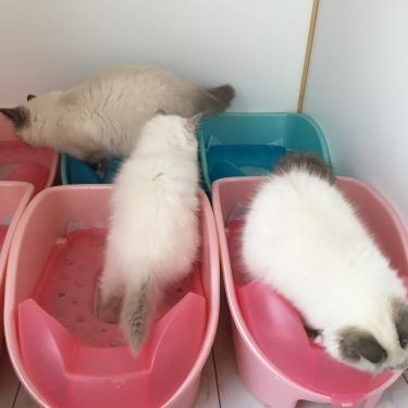 猫部屋 – トイレ–