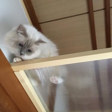 猫部屋 ー キャット ウォーク ー