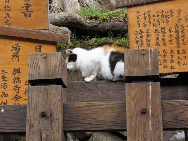 奈良まち神社の猫神様