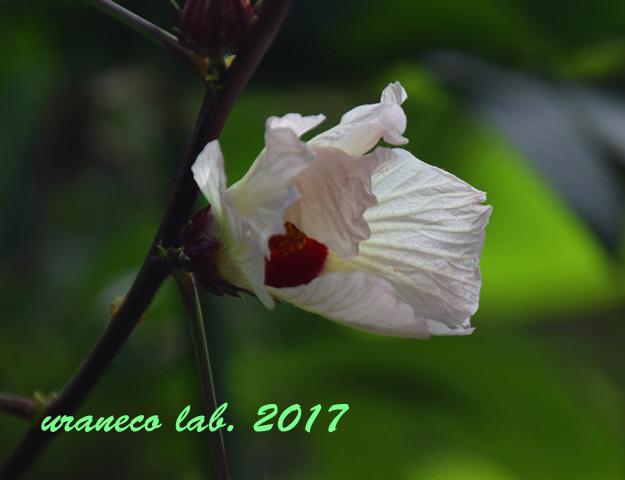 9月20日美しい花3