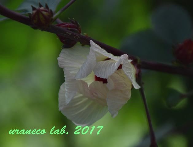 9月20日美しい花2