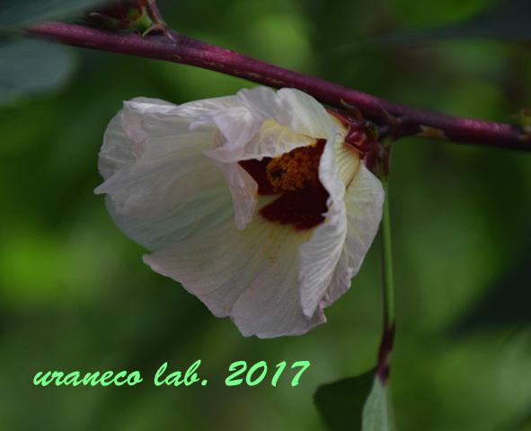 9月20日美しい花