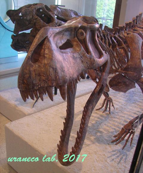 10月5日自然史博物館