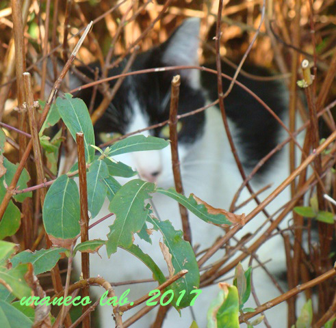 10月14日白黒猫