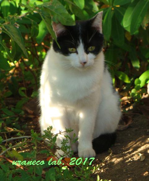 10月14日白黒猫2