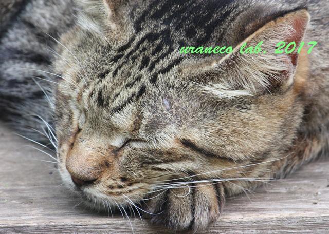 10月14日眠れる雉猫