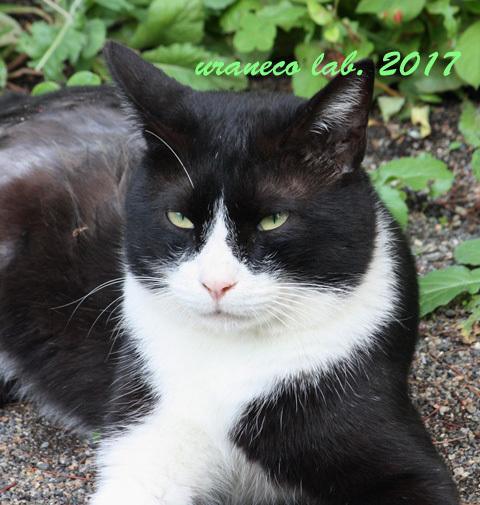 10月14日白黒子猫2