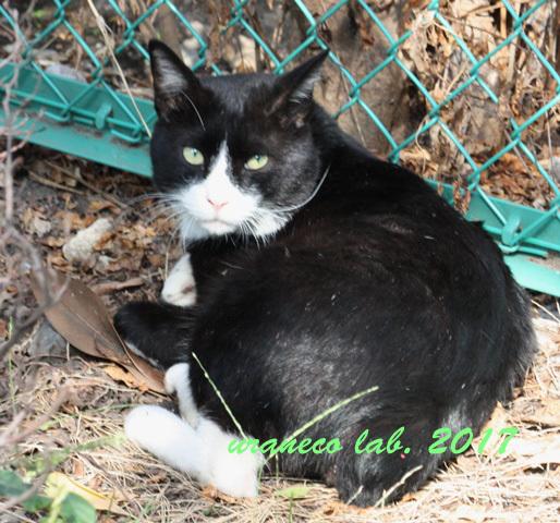 10月14日白黒子猫