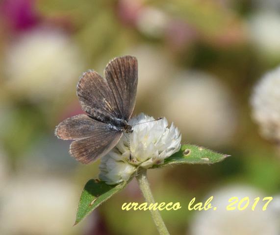 10月27日花と蝶2