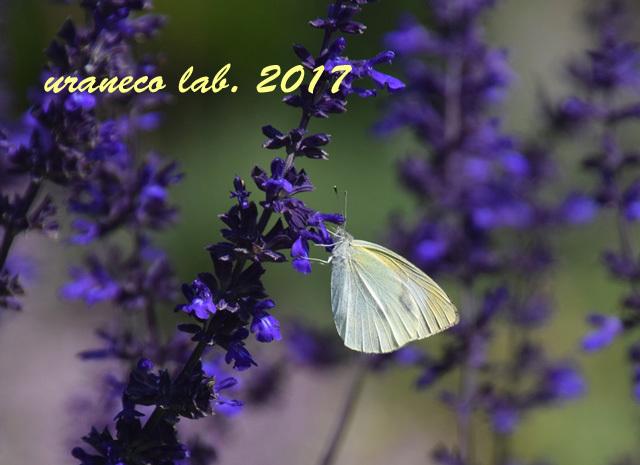 10月27日花と蝶5