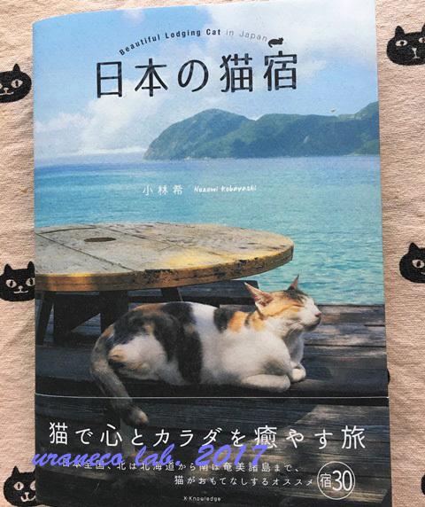 12月6日日本の猫宿
