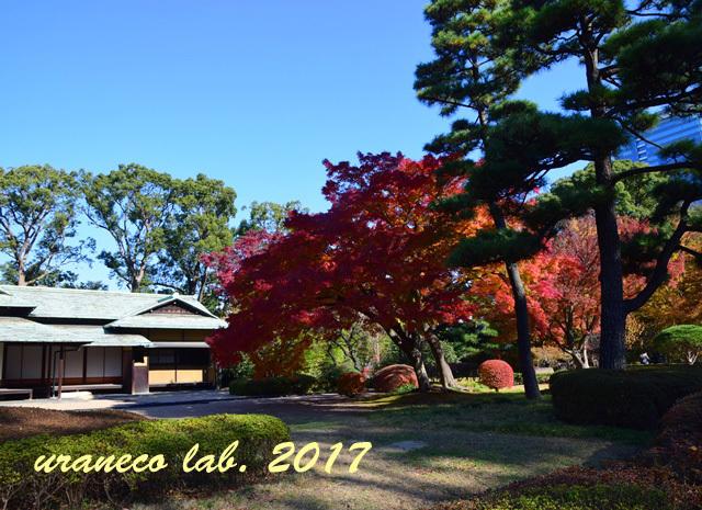 12月5日日本庭園