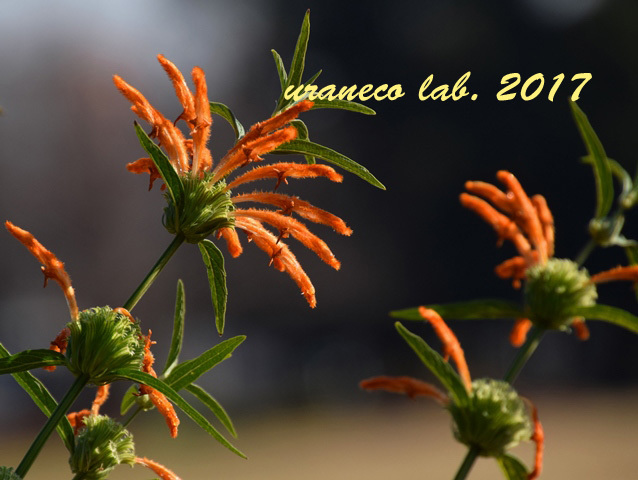 12月21日冬の花4