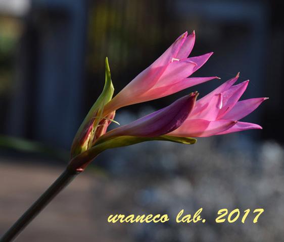 12月21日冬の花3