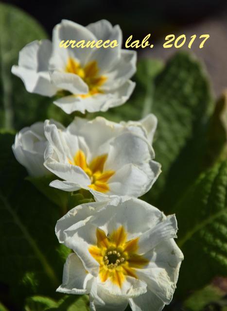 12月21日冬の花