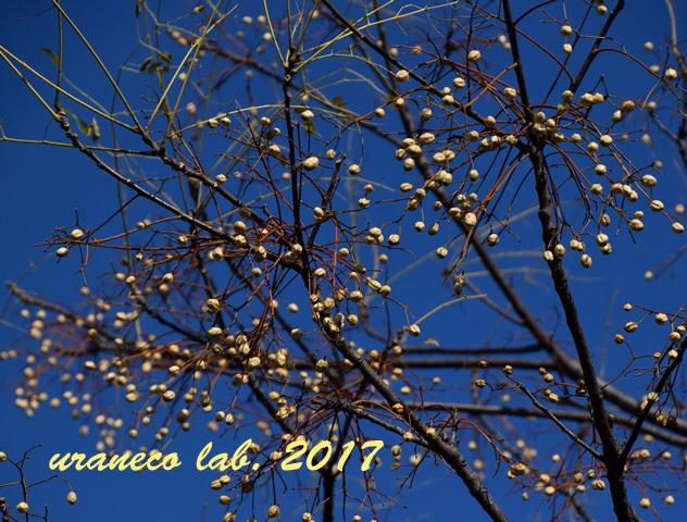 12月21日冬木立2
