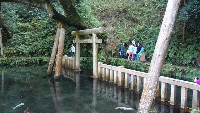 鹿島神宮御手洗池2017