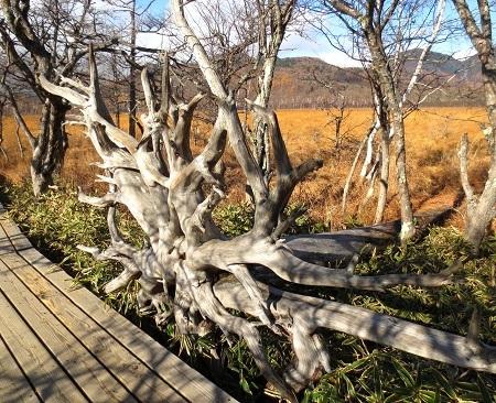 IMG_0768オブジェになった木の根っこ