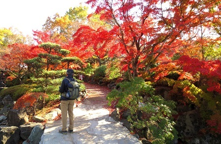 IMG_0803桜山公園のモミジ