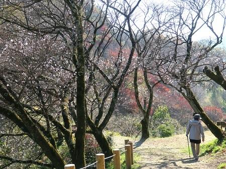027冬桜