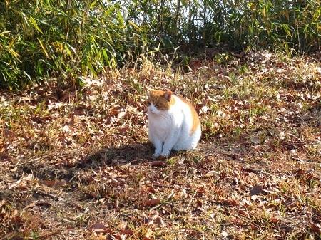 IMG_0949公園の猫