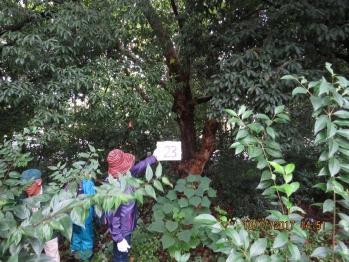 23 101樹林内の調査