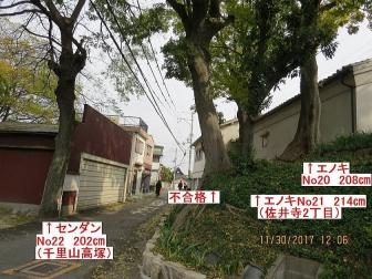 22-20大木3本pp