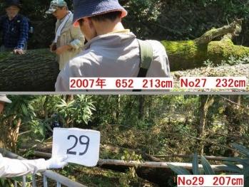 29-164down75xx.jpg