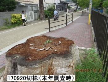 yukari179.jpg