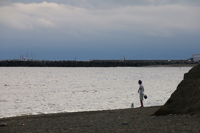 scenery0723アメショ_16