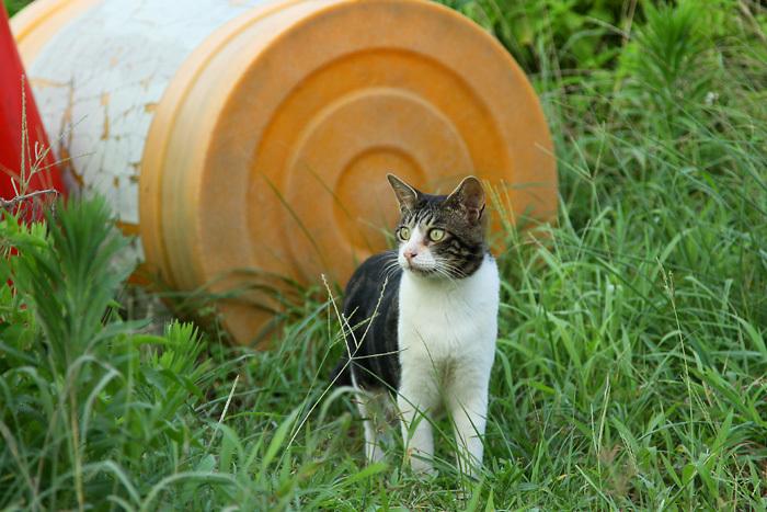 Kitten1607_019.jpg