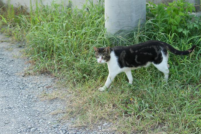 Kitten1607_020.jpg