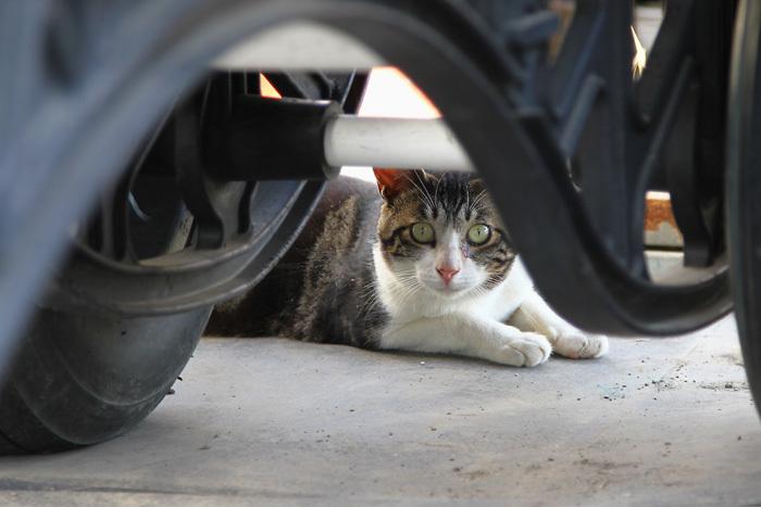 Kitten1607_022.jpg