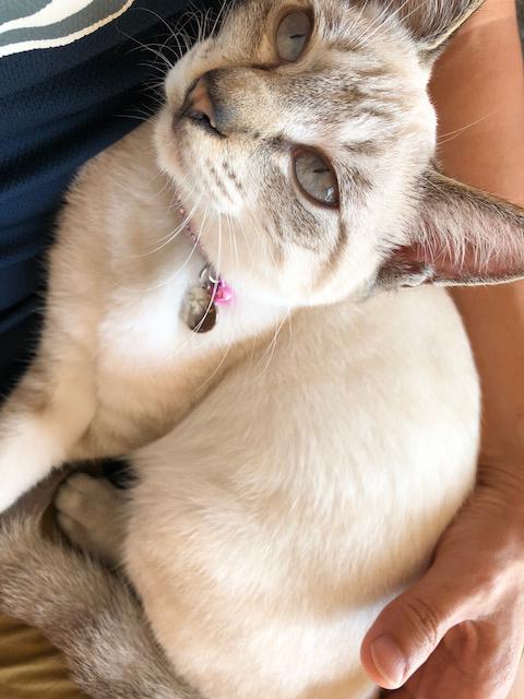 cat20171103-0153.jpg