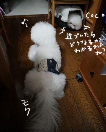 DSC09990.jpg