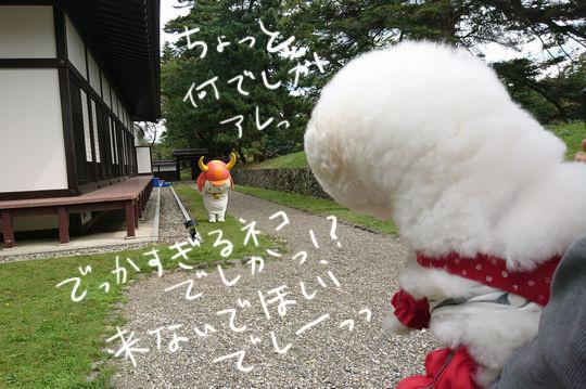 DSC_2512_20171022225730d75.jpg