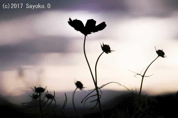 _F4A5934.jpg