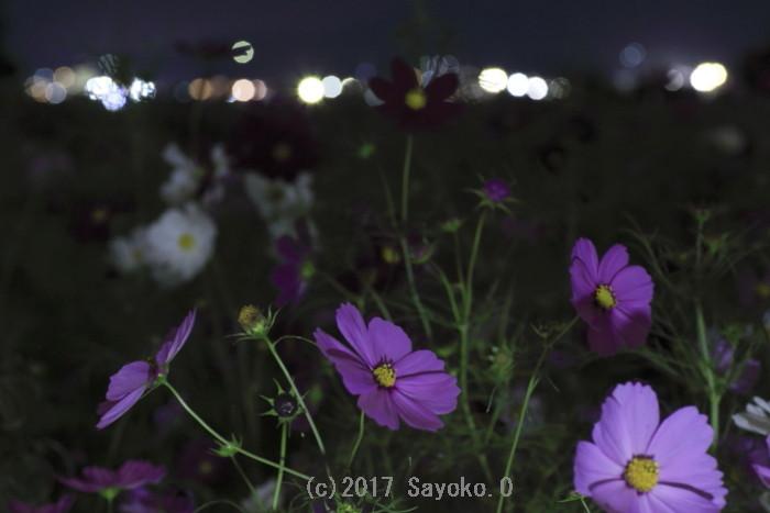 _F4A7395.jpg