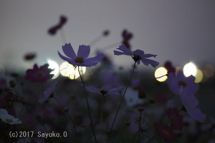 _F4A8046.jpg