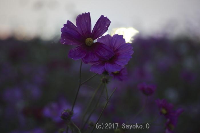 _F4A8052.jpg
