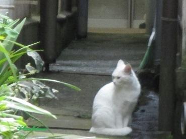 白猫1710