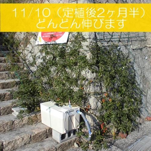CIMG3666-K.jpg