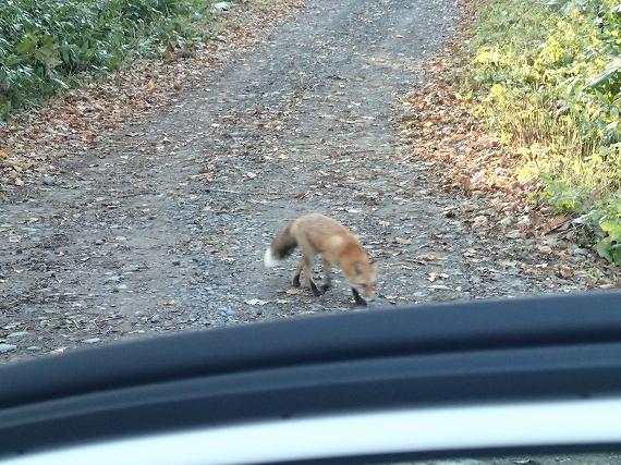 狐E20171021